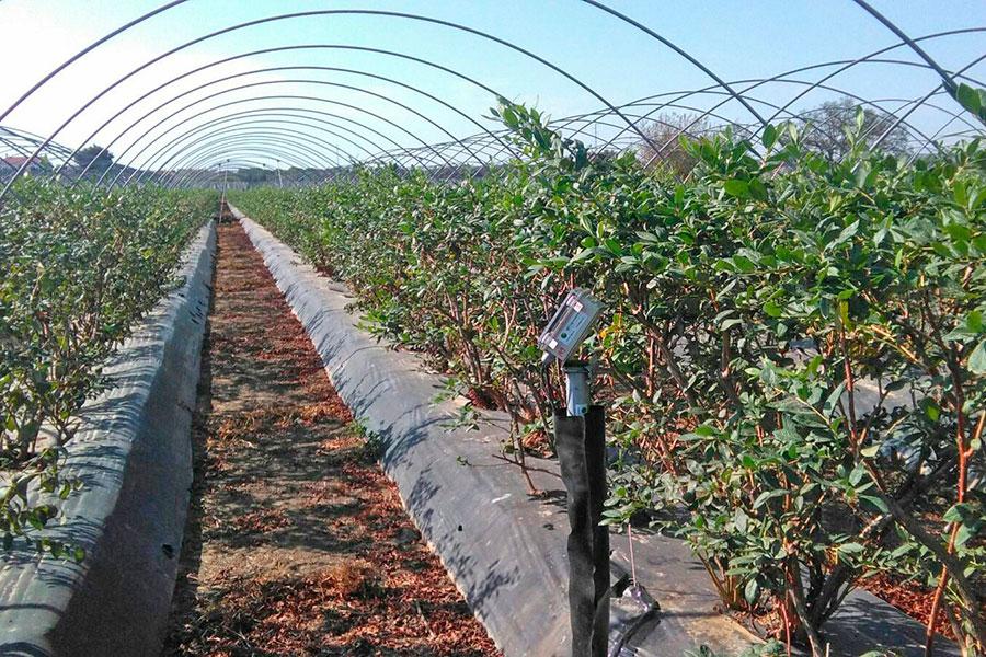 Agricultores y técnicos del Condado se forman para aumentar el riego eficiente en los frutos rojos